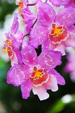 Orchid Flower GREETINGS CARD Steve Greaves Photo Print Plant Gardening Botanical