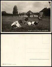GRAVENBRUCH Stadt Neu-Isenburg - Waldrestaurant Forsthaus Kühe a.d. Weide ca1935