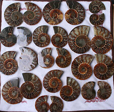 Wholesale Price!2.2lb/10-12Pairs Ammonite Cut in half Fossil Specimen Madagascar