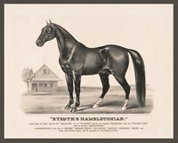 """1871- Rysdyk's Hambletonian, Race Horse, antique wall decor, 20""""x16"""" Art print"""