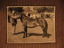 "Champion Exmoor Stallion ""Heatherman"" Original 1950's Horse / Pony Photo"