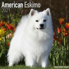 American Eskimo Calendar 2021 Premium Dog Breed Calendars