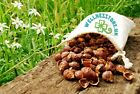 FROM NEPAL 1Kg Indian Soap Nuts Laundry&Dishwasher Detergent + WASH BAG FreeP&P