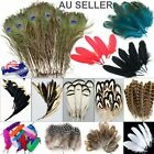 Mix Hen Pheasant Peacock Tail Eye Goose Feathers Wedding Millinery DIY Craft Par <br/> 44 Different Type,Size,Colour✓SDY Fast Free✓GST include