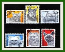cat / cats BULGARIA / Bulgarie Bulgarien - Stamps1989 - used