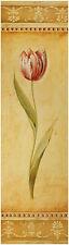 Fabrice de Villeneuve poster stampa d'arte immagine Tulipano con bordo 70x20 cm porto franco