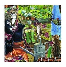 Garden Shed Black Ginger Tabby Black & White Cat blank greetings card