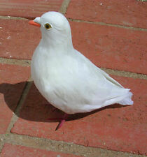 Realistic Lifelike Pigeon/Dove Ck108W