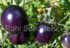 Helsing Junction Blues Tomato - Most Stunning Very Pleasant & Sweet Black Tomato