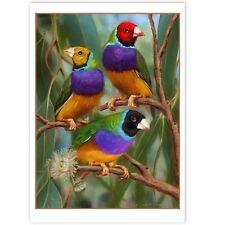 © ART - Australian Gouldian Finch Wildlife Bird Original nature print by Di