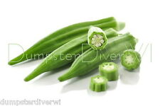 EMERALD OKRA Spineless Heirloom 120+ seeds Nutritious & Flavor Organic NON-GMO