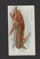 1889 Allen & Ginter N8 50 Fish from American Waters Sturgeon