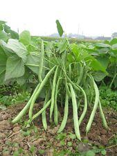 Dwarf Green bean Vegetable seed 15 Seeds snap beans Phaseolus patio garden