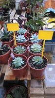 5 etiquetas para plantas y macetas de clavar 30 cms para pegatina y escribir