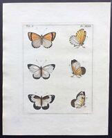 1782 Dru DRURY Vol.3 Pl 32 SIX PRETTY BUTTERFLIES HC Copper Plate XXXII L@@K