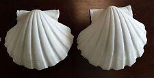 """2 Rare White Pecten Albicans Scallop Seashell Beach Nautical Decor 2"""" - 2.5"""""""