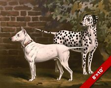 Bull Terrier & Dalmation Dogs Portrait Pet Dog Art Painting Print On Real Canvas