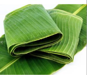 UK Banana Leaves-Fresh!!  - Ideal for Steaming/Presentation/Cooking Eg Tamales