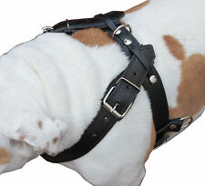 "Genuine Leather Dog Pulling Harness Padded Studded 33""-37"" chest Bulldog Pitbull"