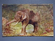 R&L Postcard: Raphael Tuck Oilette Wild Animals 3039, Elephant