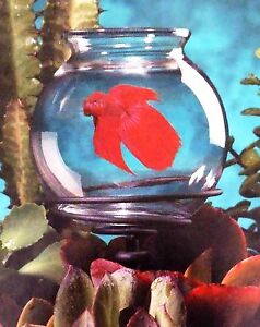Marineland Betta Fish Bowl Planter for Use in Potted Plants - Nib