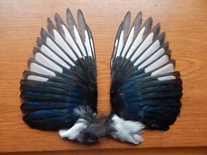 Pair Dried  Magpie Wings  Bird wings Fly Tying Arts Crafts Taxidermy