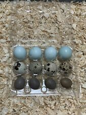 Blue celadon Red coturnix And Buttons quail hatching eggs Certified+free 🎁 Gift