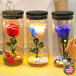 REAL Preserved Forever Rose Touch Lamp Special Anniversary Valentine's Day Gift