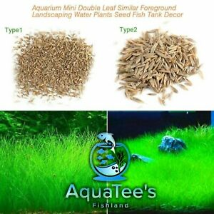 Aquarium Plant Seeds Aquatic Double Leaf Carpet Water Grass Fish Tank Décor Nano