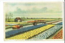 CPA-Carte postale-  Pays Bas - Groeten- uit Bloembollenvelden S652