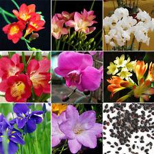 New listing 100Pcs Freesia Bulbs Perfume Flower Seeds Garden Plant Perennial Decor Hl71