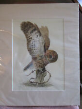 Fabulous limited edition print of tawny owl by Valerie Baines mounted & unopened