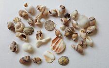 Sea shells, from United Kingdom
