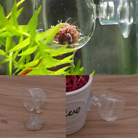 Glass Pot Plant Kerf Cup Holder Shrimp Aquarium Fish Tank Aquatic Feeder New