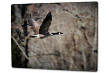 Tin Sign XXL Bird Species  Canada goose
