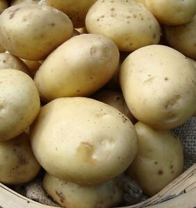 NEW SEASON - ESTIMA Seed Potatoes - Certified Seed, Second Early