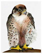 A4 Lanner Falcon Bird Watercolor Painting Signed Limited Edition Print