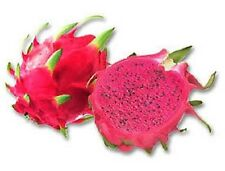 20 PURPLE DRAGON FRUIT CACTUS Pitaya Seeds *Comb S/H