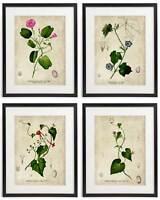 Vintage Botanical Floral No. 07 Art Home Wall Art Print Set of 4 Prints UNFRAMED