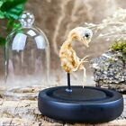 Y57c Preserved Taxidermy Oddities Curiosities Fetal Chick Chicken glass dome