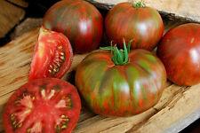 25 x Berkeley Tie Dye Rosa, Handwerker-Tomaten-Samen. Blitz ><< BIO >><