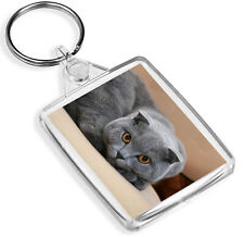 Scottish Fold Cat Porte-clés-IP02-orange yeux Chaton Gris Cool Cadeau #12677