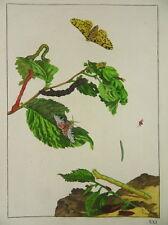 SCHMETTERLING RAUPE KUPFERSTICH JACOB L'ADMIRAL 1774 ENTOMOLOGIE BUTTERFLY I60