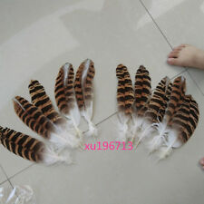 wholesale high quality 10pcs Martial rare feathers 20-26cm/8-11inch decorative