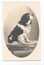 BM980 Carte Photo vintage card RPPC Animaux Chien portrait sur table Coker