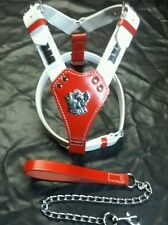 Beautiful Bull Terrier Stafff Staffie,padded Leather Harness & Lead