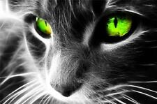 """CAT B&W with Green Eyes.  Picture on  Modern BOX-CANVAS 20""""x 30"""""""