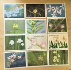 SPECIAL LOT Bhutan 1990 882-93 - Orchids - 5 Sets of 12 S/S - MNH