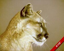 MOUNTAIN LION COUGAR BIG WILD CAT HEAD ANIMAL PAINTING ART REAL CANVAS PRINT