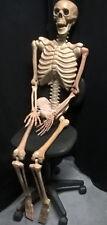 "5ft Skeleton Halloween Horror Prop 60"" Life Sized Skeleton"